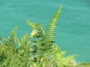 Image for Ferns and Sea