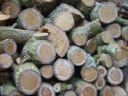 Image for Wood Pile