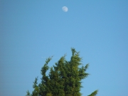Image for Moon, Plane, Tree