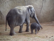 Image for Baby and Mother Elephant
